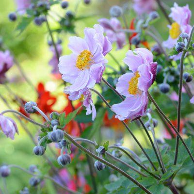 Catégorie Plantes et fleurs Photographe amateur à Pornichet La Baule Saint Nazaire Guérande en Loire Atlantique 44